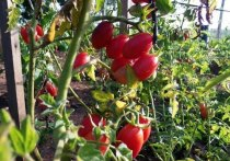 Полезные свойства сделают сад и огород лучше