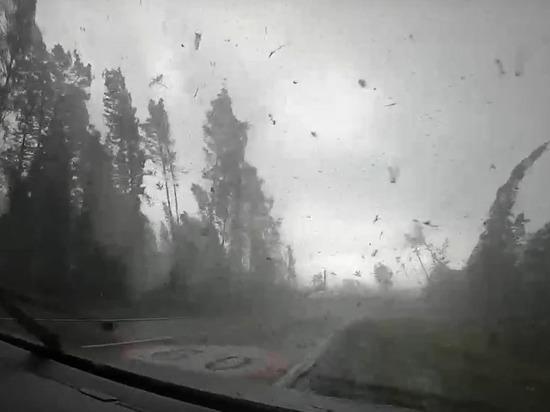 Поваливший десятки деревьев мощный ураган в Белоруссии попал на видео