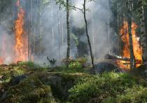 Дым от лесных пожаров в других регионах добрался до Ноябрьска
