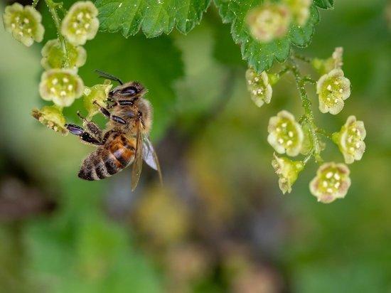 В Красноярском крае погибли более 20 млн пчел