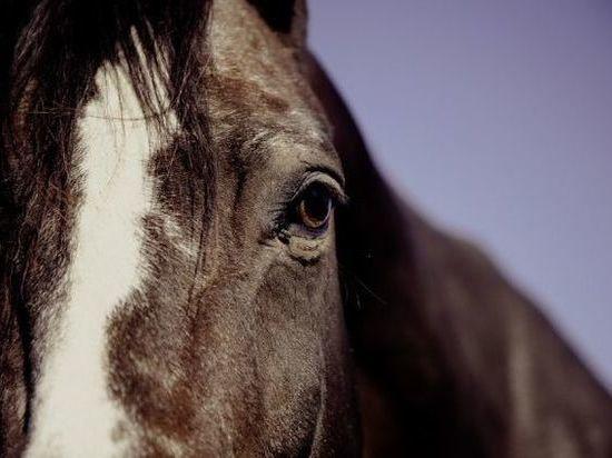 В Холмогорском районе в помощи спасателей нуждались не только люди, но и животные