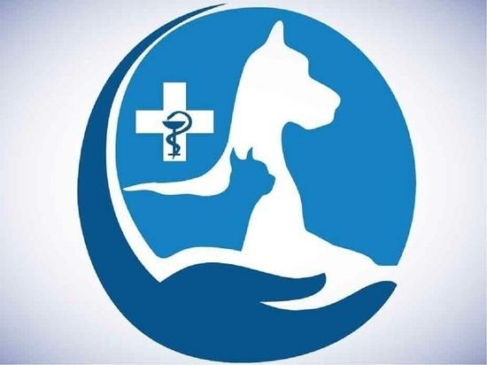 Раненого коптером голубя готовы принять в центре ветеринарии Салехарда