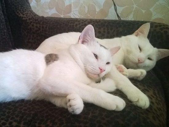 В Британии от неизвестной болезни массово гибнут кошки