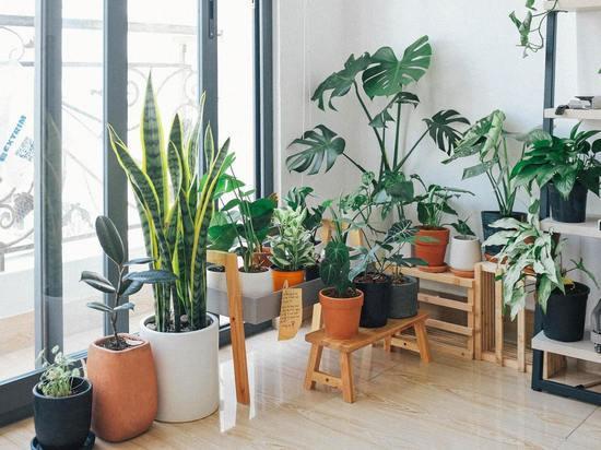 Цветоводам рассказали, как ухаживать за комнатными растениями в августе