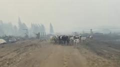 Коровы в якутском селе вернулись с пастбища к сгоревшему двору