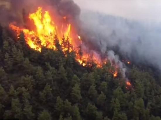 Уникальное 2500-летнее оливковое дерево сгорело в пожарах на греческом острове Эвия
