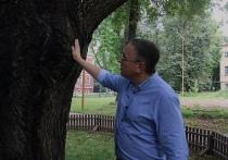 В Калуге из старинного дуба в парке сочится жидкость с запахом брожения