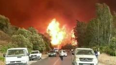 Алжир охватили лесные пожары из-за аномальной засухи: кадры бедствия