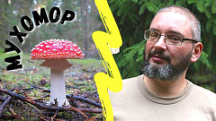 """""""Классная штука - мухомор"""": миколог раскрыл ядовитый гриб по-новому"""