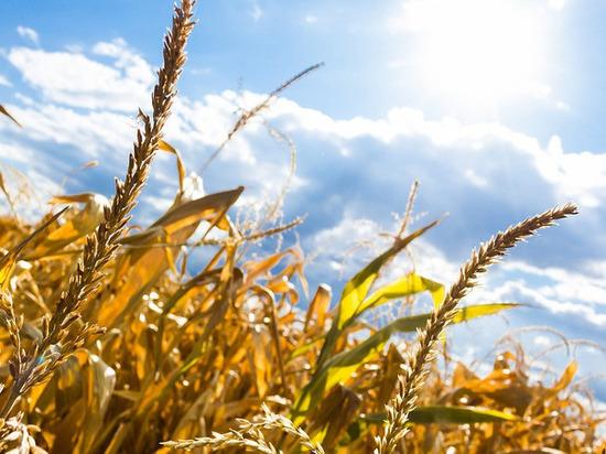 14 августа в Смоленской области будет тепло и без осадков