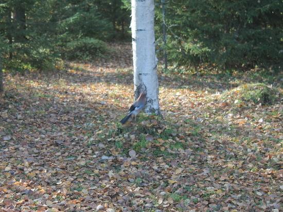 Несовершеннолетние пробыли в лесу около пяти часов
