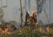 Два лесных пожара за сутки потушили в районе Ноябрьска