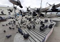 О начале птичьей пандемии заявили подмосковные ветеринары