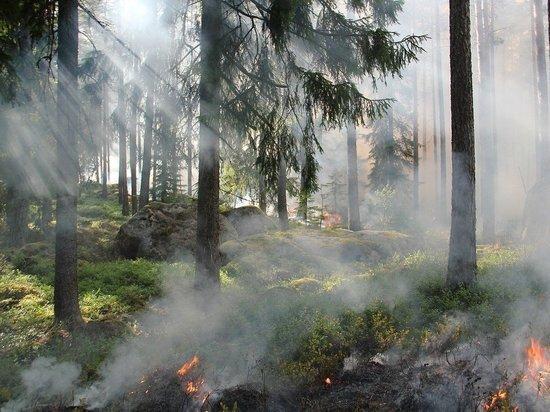 Беннет оценил ситуацию с пожаром в Иерусалимских горах