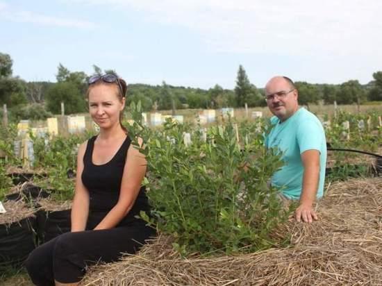 Фермеры в Горшеченском районе Курской области выращивают голубику по соцконтракту