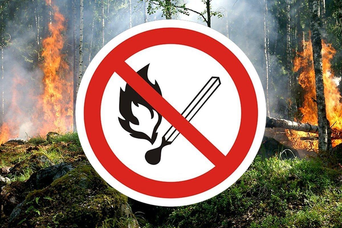 Пожар в Кологривском лесу наконец-то ликвидирован
