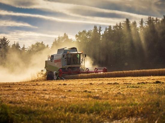 Осенью регионы снова могут потерять часть урожая