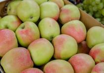 Медик советует есть яблоки в первой половине дня, в крайнем случае во время полдника, чтобы не нагружать пищеварение
