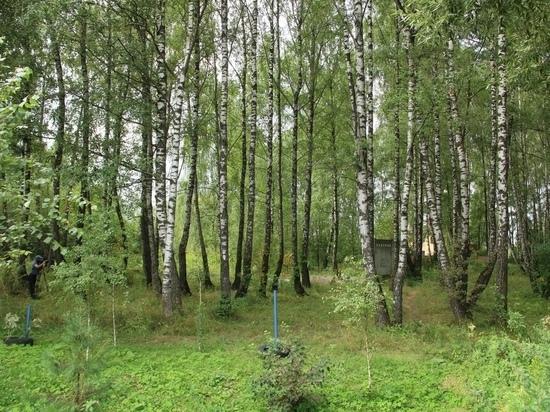 В Калуге сохранят березовую рощу на Малинниках