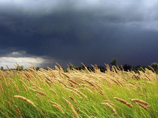 В Курской области 20 августа прогнозируют дожди, грозы, ветер и до +30 градусов