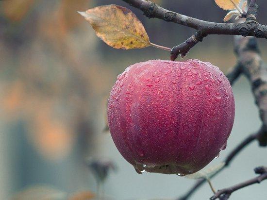 Как яблоки могут навредить организму