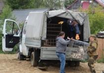 Очередной рейд по отлову бездомных животных прошел в Салехарде