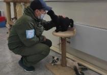 Экоактивисты «Будущего Арктики» привезли гостинцы животным из приюта в Лабытнанги