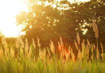 В ряде регионов РФ в ближайшие дни прогнозируется аномальная жара