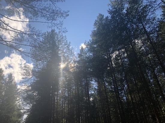 В Кировской области горят леса