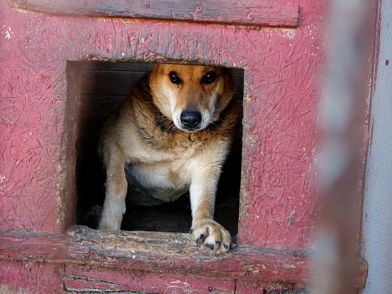 Псковские зоозащитники попросили о помощи в покупке утеплителя