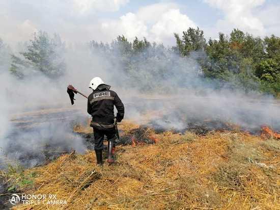 В Курской области продлен срок ограничений на посещение лесов