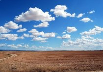 В калужском минсельхозе рассказали, почему не выращивают коноплю