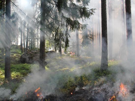 В Смирныховском районе на Сахалине тушат лесные пожары