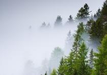 Недавние лесные пожары в Лениногорском районе Татарстана произошли из-за сильного ветра