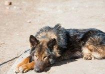 В конце минувшей недели, 20 августа, на поле в Ворошиловском районе Волгограда зоозащитники обнаружили тела биркованных собак