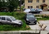 Стая уличных собак загнала маленького пса на крыльцо и напугала жителя Салехарда