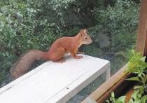 Взять с собой пакетик орешков, собираясь на прогулку в лес — вдруг попадется белка! — старый, знакомый каждому ритуал
