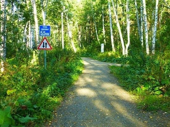 Эко-забег пройдет на «Тропе здоровья» Буревестника в Томске