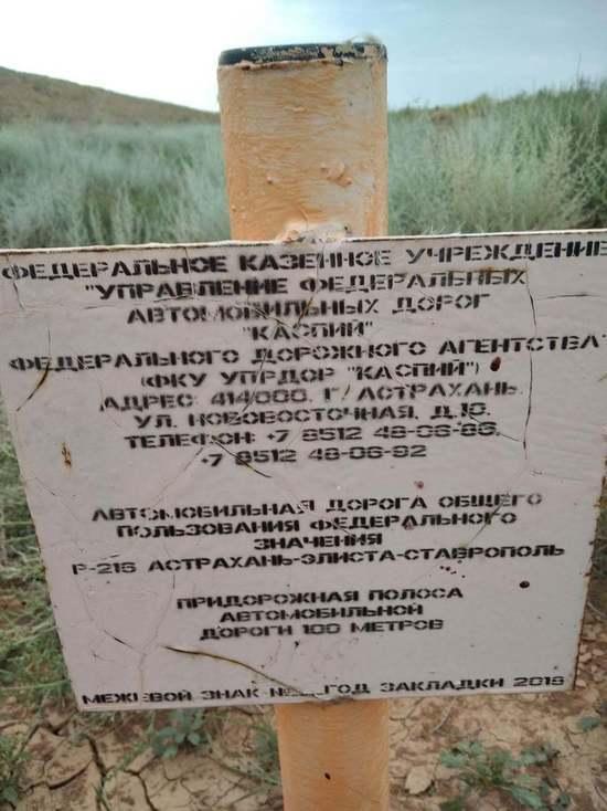 В заповеднике «Черные земли» ночной случай с погибшей самкой сайгака считают показательным