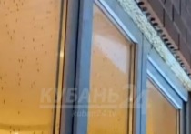 После наводнений города Кубани атаковали полчища комаров