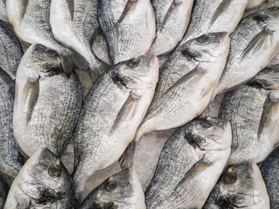 Браконьера с тридцатью хвостами поймали на юге Сахалина