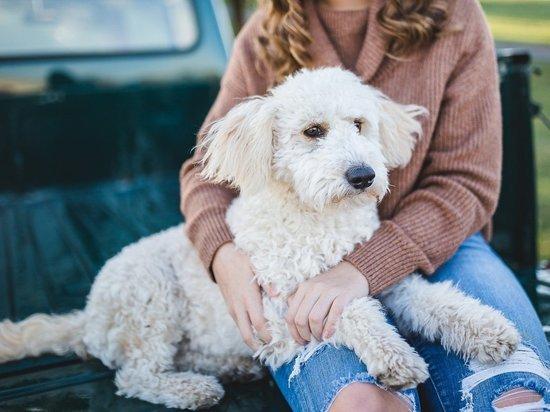 Как правильно ухаживать за собакой в период линьки