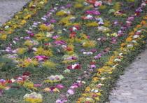 Километровую дорогу выстлали цветами в Псково-Печерском монастыре