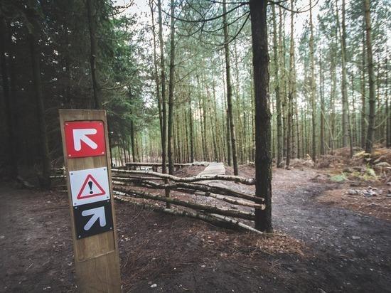 В лесу под Томском делают указатели для заблудившихся
