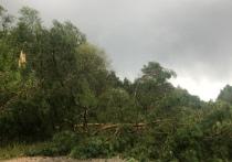 «Было очень страшно»: Видео смерча в Себежском районе опубликовали очевидцы