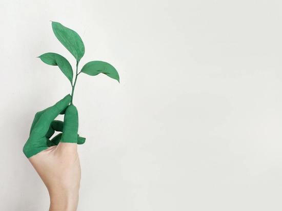 «Зеленые» инициативы Сахалина: водород, газ, изучение климата
