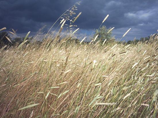 Рабочая неделя начнется в Томске с магнитной бури и сильного ветра