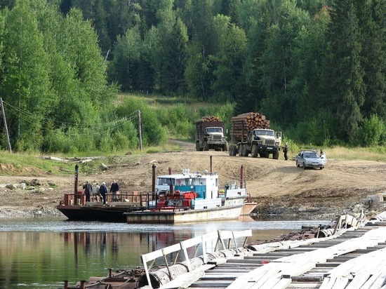 В Томской области возбуждено уголовное дело по факту незаконной вырубки лиственниц