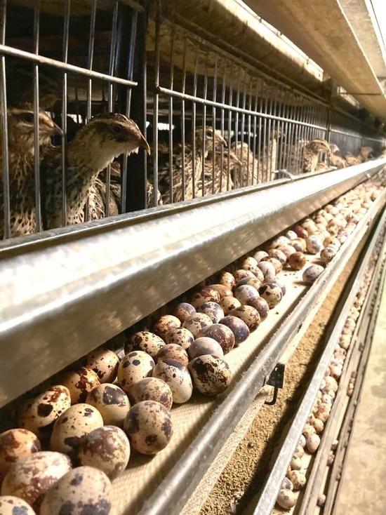 Серпуховская фабрика примет участие в российской агропромышленной выставке