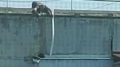 Спасение кота в Новороссийске ведром и палкой сняли на видео
